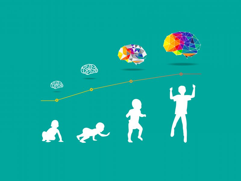 brain_development